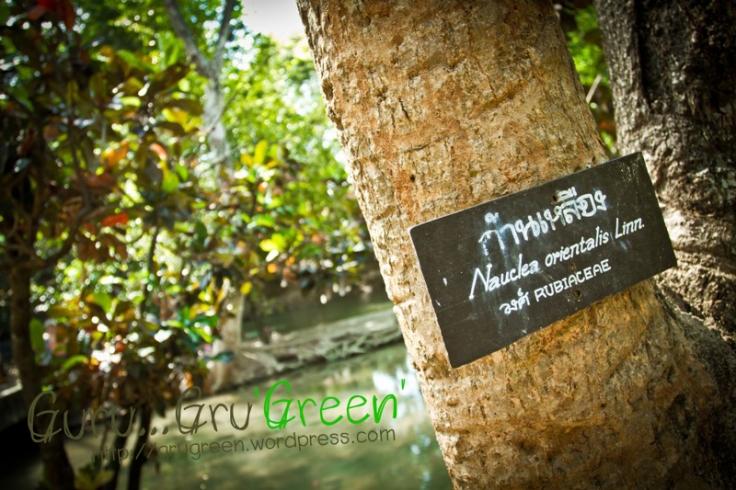 น้ำตกวังก้านเหลือง ลพบุรี by Guru GruGreen 08