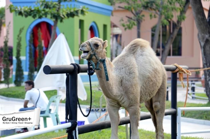 รีวิว_Camel_Republic_หัวหิน_by_GruGreenPlus_29